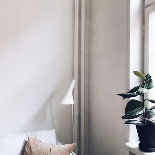 Potted plant in window sill at home