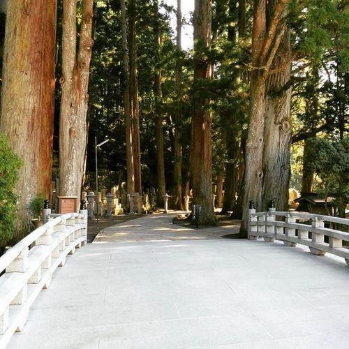 Bridge Tree Okunoin Kouyasan Japan
