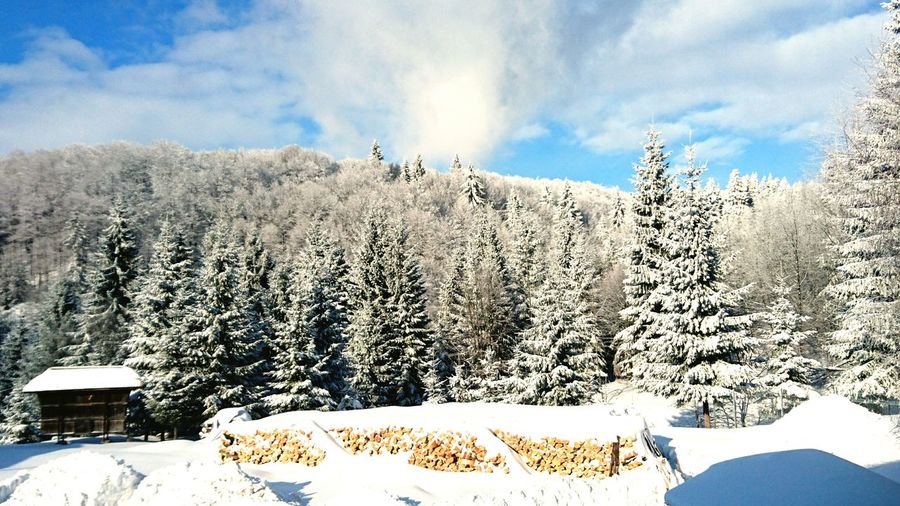 Panoramic view of snow covered trees against sky