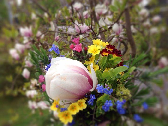 Spring flowers. Birthday Magnolia_Blossom Flowers Flowers,Plants & Garden Solstensvägen Tyresö