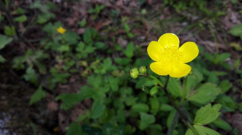 Yellow Plant Flower Nature Outdoors Love Close-up Leaf Springtime No People Beauty In Nature Plant Part Day Flower Head Freshness