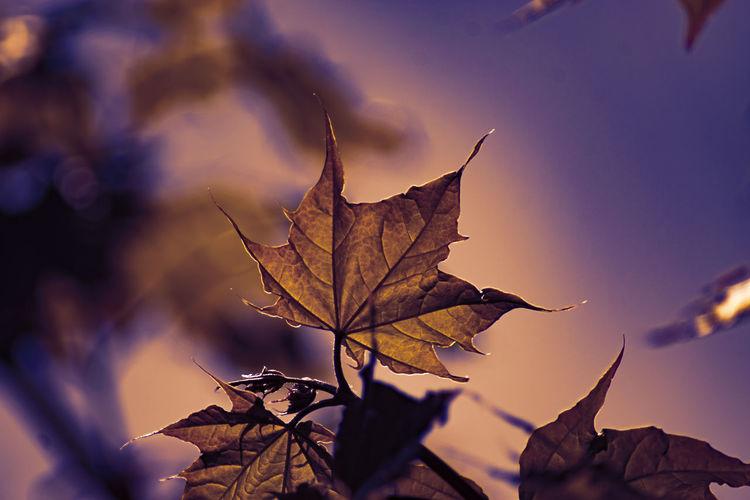 Leaves 2 Plant