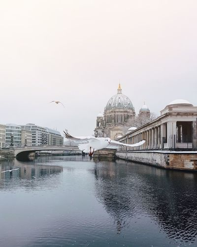 Seagull flying over river by berlin cathedral against sky during winter