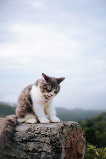 Smiling cat sitting on rock against sky