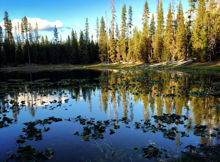 Horse Lake...one of the small lakes you can hike to around Diamond Lake, Oregon. Water Reflection Tree Tranquil Scene Tranquility Scenics Lake Forest Nature Beauty In Nature Non-urban Scene Waterfront Growth Sky Calm Blue Day Majestic WoodLand Outdoors