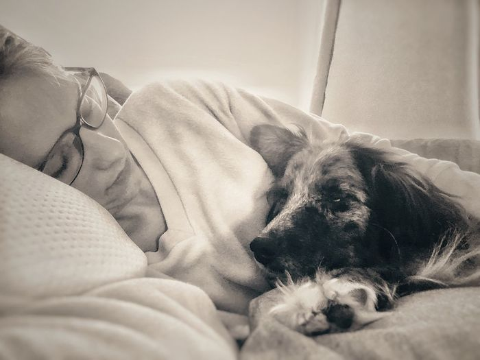 Baby it's cold outside Dog Relaxation Indoors  Sleeping Mylove Australianshepherd Whiskeylove Bed Bedtimestories Cuddles Furry Cuddle Time Blackandwhite Eyemphotography Selfietime Uniqueness