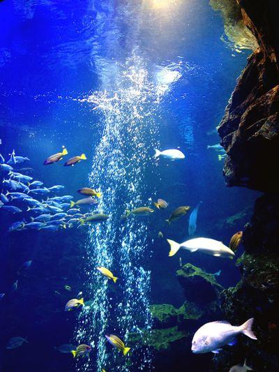 Aquarium Blue Fhish