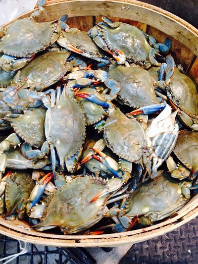 Live crabs..