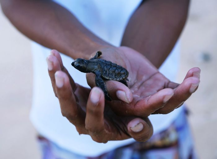Close-up of hand holding tortoise