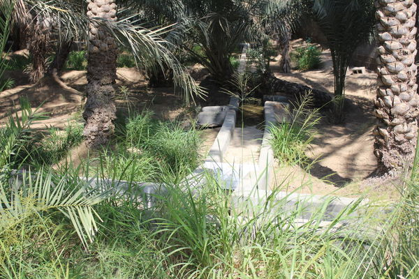 UAE, Al Ain The Great Outdoors - 2017 EyeEm Awards No People Oasis Park