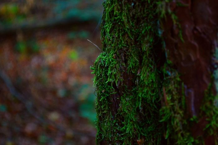 day in the Woods pt.2 Growth Close-up Tree Trunk Focus On Foreground Green Color Tree Moss Nature Bark Botany Beauty In Nature Tranquility Outdoors Extreme Close-up Scenics Freshness Growing Fragility No People