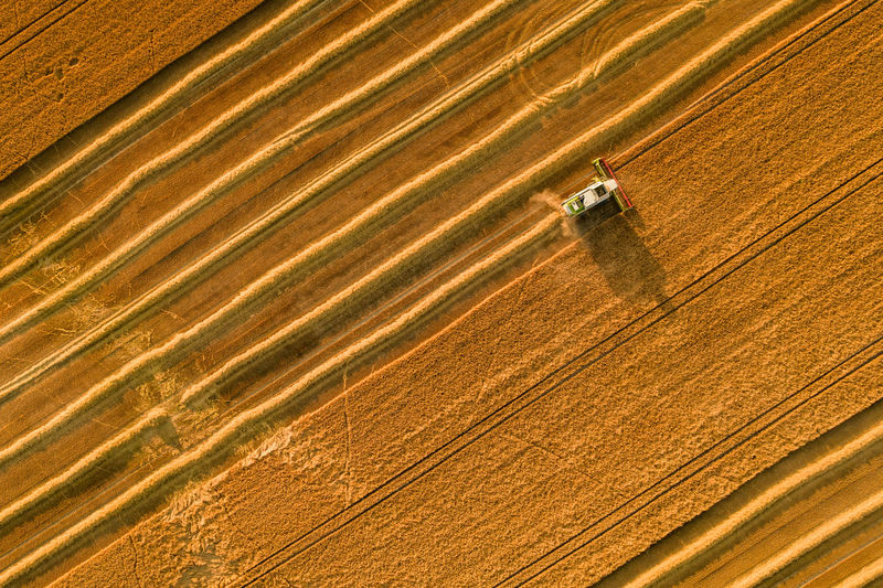 Wheat crop harvest. aerial view of combine harvester at work during harvest time.