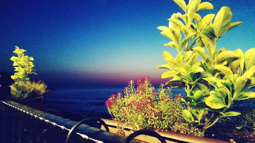 Sunset Flowers Relaxing Sea Rize Rize/Turkey Sky Taking Photos Sunset_collection