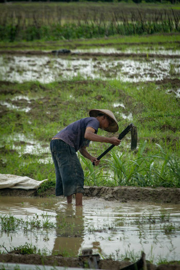 Farm Water Working Occupation Farmer Rice Paddy Agriculture Full Length Marsh Reflection Mud Swamp Wetland Ankle Deep In Water Reed Wading Freshwater Bird Flamingo Ibis Shallow Filled Alligator Reed - Grass Family Standing Water Puddle Pond Muddy Salt Basin Salt - Mineral Irrigation Equipment Fishing Rod