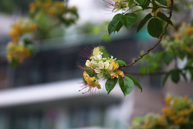 Close-up of flowering plant against tree