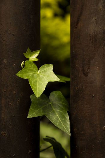 Nos escabulliremos Leaf Plant Part Plant Close-up Green Color Nature Beauty In Nature Leaves Green
