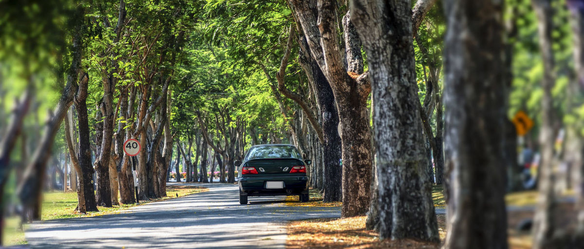 Car on road amidst trees in city