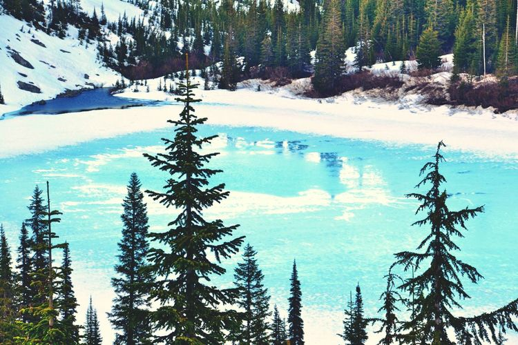 Mount Rainier Lake Frozen Lake SeattleHoliday Snow Protecting Where We Play Travel It's Cold Outside