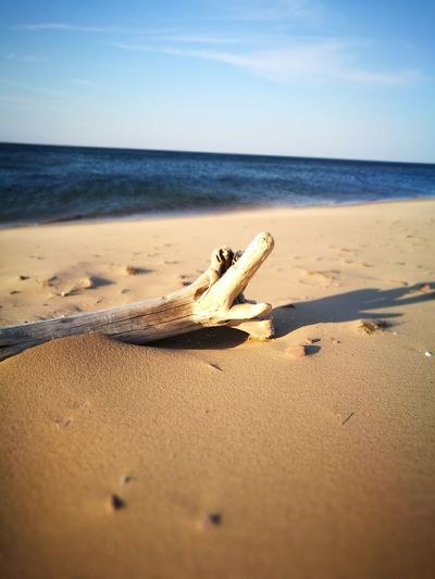 Happy Solitude Cavendish EyeEm Selects Cavendish Waves Ocean Sea Prince Edward Island Beauty In Nature Nature Travel Destinations Summer Leicagraphy Leicaexplorer HuaweiP9 Dead Wood Sand Beach Sea Nature Horizon Over Water Sand Dune Sky