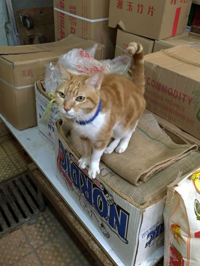 Cat boss Cat
