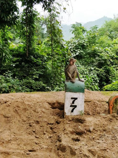 Monkey Outdoors Nature Animal Themes Mammal Monkey Business Noworries No Work Today 7 Seven