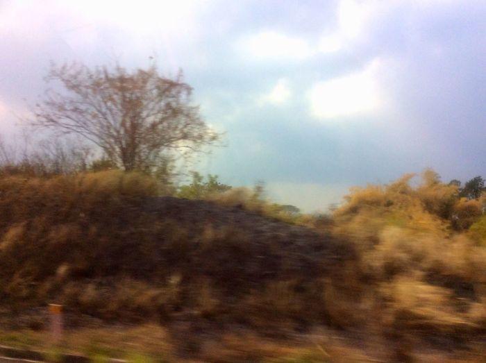 Fuzzy Blur Lone Tree Desolation Wilderness Memories Subic Philippines Showing Imperfection