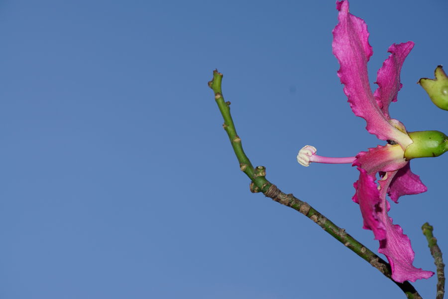 Select Eyem Clear Sky Flying Blue Pink Color Sky Prickly Pear Cactus Pollen