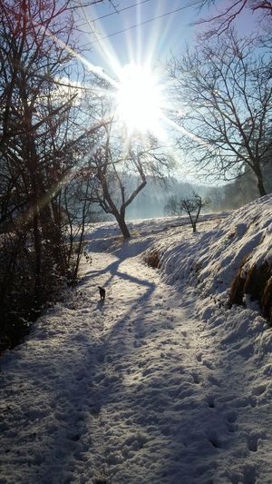 EyeEmbestshots Wintertime EyeEmNewHere Sunlight Nature Beauty In Nature Cold Temperature Landscape Eye4photography  EyeEm Nature Lover Life In Motion Slovenia ❤ Outdoors Eyevision. Lifeisbeautiful Landscape_photography LG G3 Photography Snow Walking In The Snow Sloveniawithlove