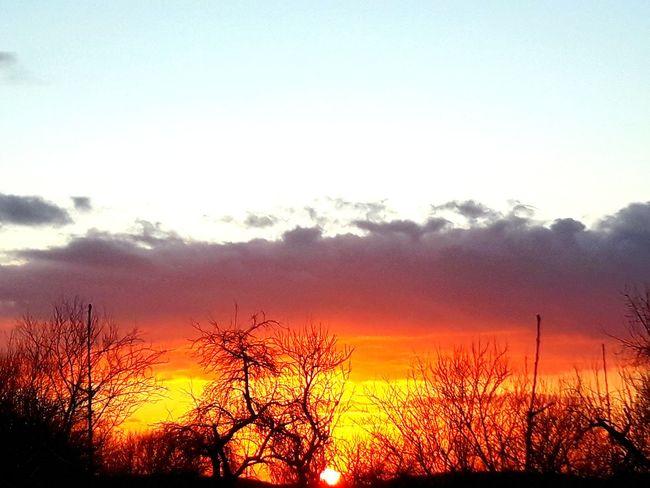 Sunset Nature Sky Tree Sun Orange Color Growth