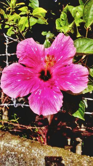 bloom 🌸