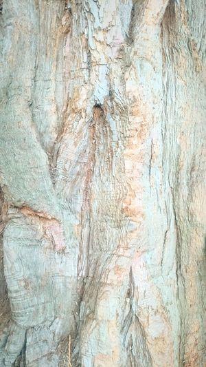 Tree Bark Tree Bark