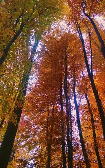Autumn Mountainbiking MTB Tropberg Autumn Leaves