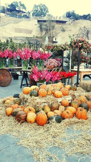 Pumpkin Fruit Choice Market Variation Water For Sale Retail  Arrangement Sky