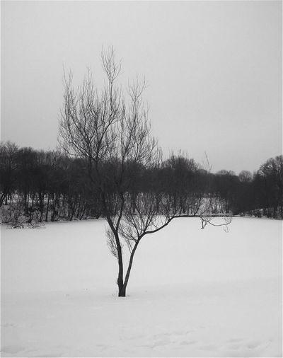 Black And White Landscape Winter Eye4photography