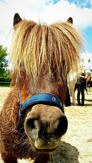 Pony Ponytail