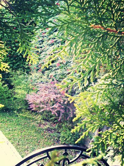 Amazing Beautiful Plants Nature Summer ☀ Feodosia Green City Sun Pink Flow
