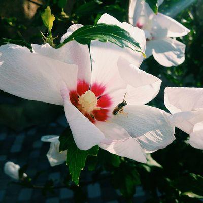 Summer Views Sammer Flowers Crimea