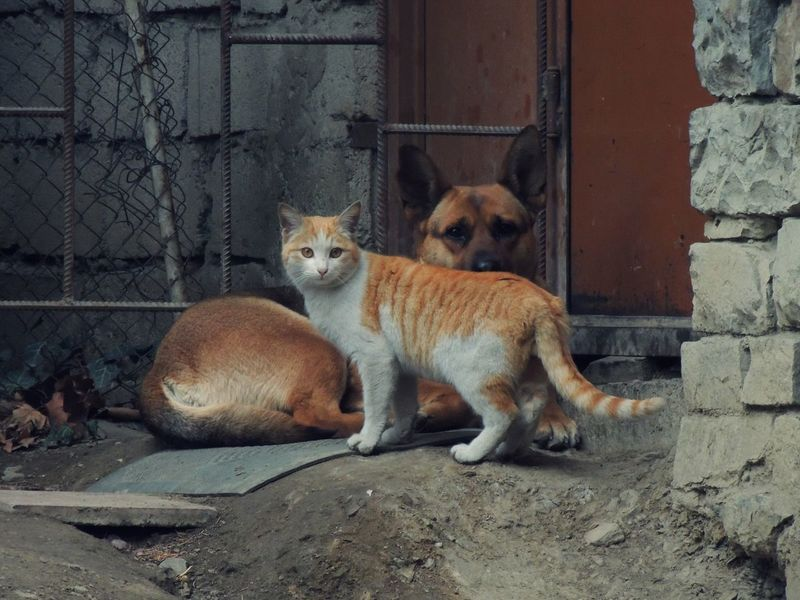 Animal Themes Cat Cat And Dog Day Dogs Domestic Animals Feline Mammal Nature No People Outdoors Pets Portrait Stray Animal Young Animal