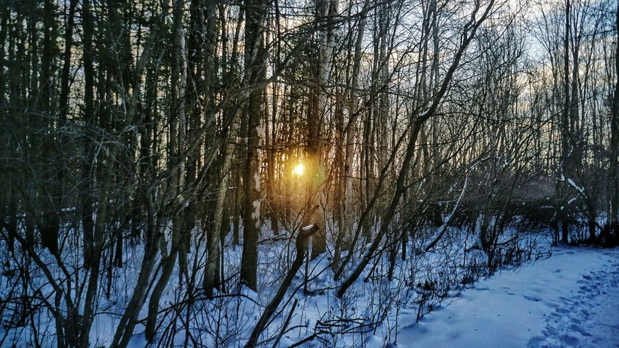 Tree Nature Beauty In Nature Growth Winter Scenics Snow Tranquility Cold Temperature No People Outdoors Tranquil Scene Forest Sky Day Northern Dawn The Great Outdoors - 2017 EyeEm Awards Shades Of Winter