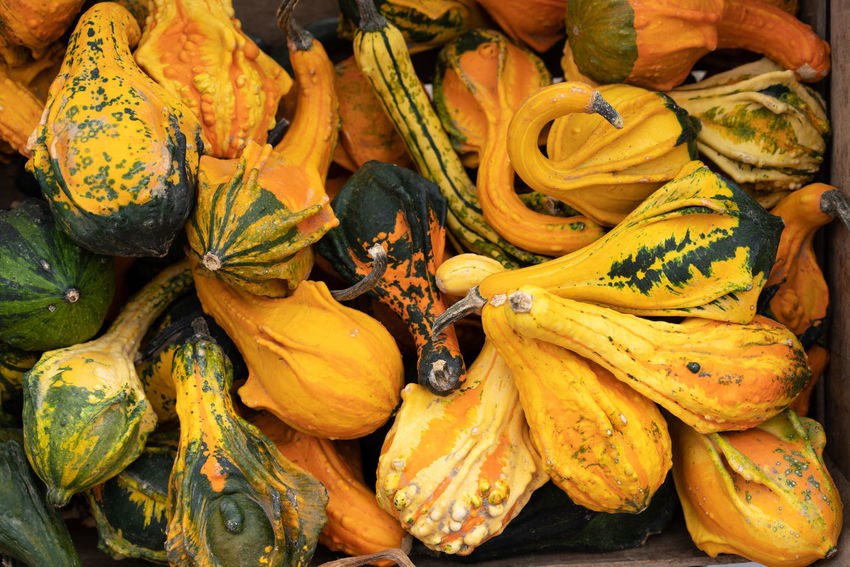 Food Food And Drink Healthy Eating Freshness Market Retail  Market Stall No People For Sale Fruit Wellbeing Yellow Close-up Abundance Pumpkin Day Full Frame High Angle View Vegetable Large Group Of Objects Outdoors Retail Display Leaves Pumpkins