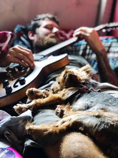 Dog lying on lap while man playing guitar on bed at home