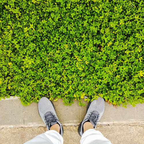 Low section of man standing by plants on footpath