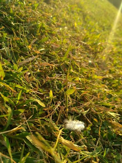 Nature Beauty In Nature Sunnyday☀️ Grassy