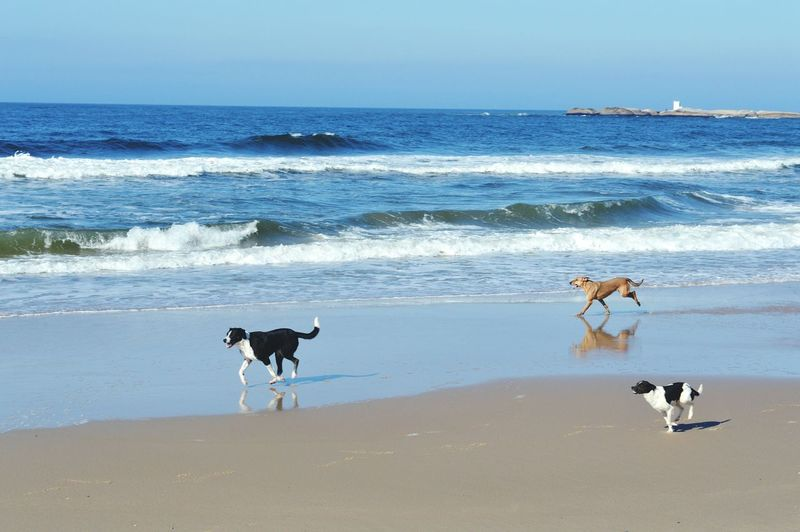 Beach Sea Dog Animal Sand Nature Sky Uruguay Puntadeldiablo Pets Water Playa Praia Dogslife Freedom Summertime Pet Portraits Done That.