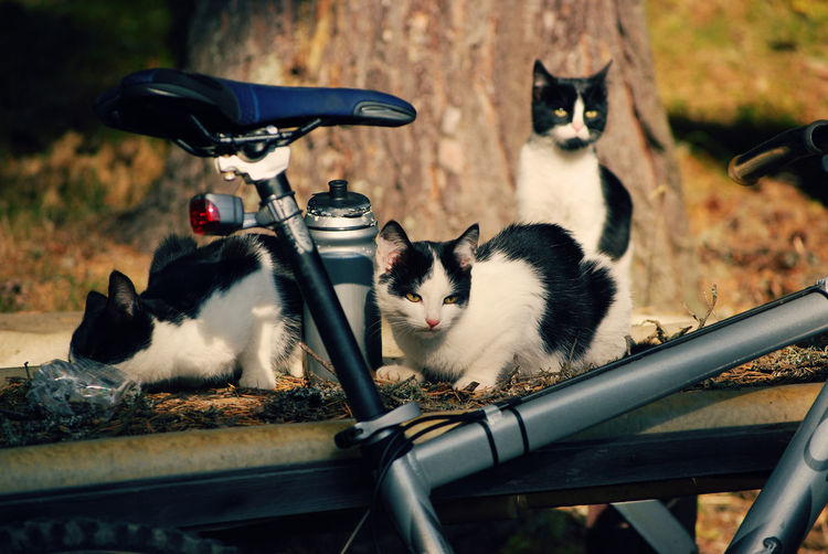 Close-Up Of Cat Sitting By Bicycle