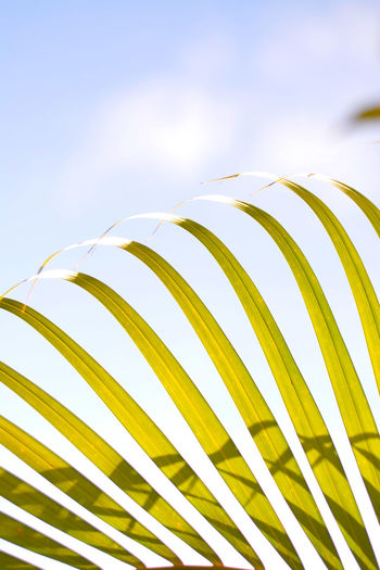 Palm Leaf Nature No People Close-up Leaf Palm Tree Frond Plant Part Tropical Climate Pattern Natural Pattern Beauty In Nature Sky Fern Botany Plant Growth Sunlight Outdoors Day