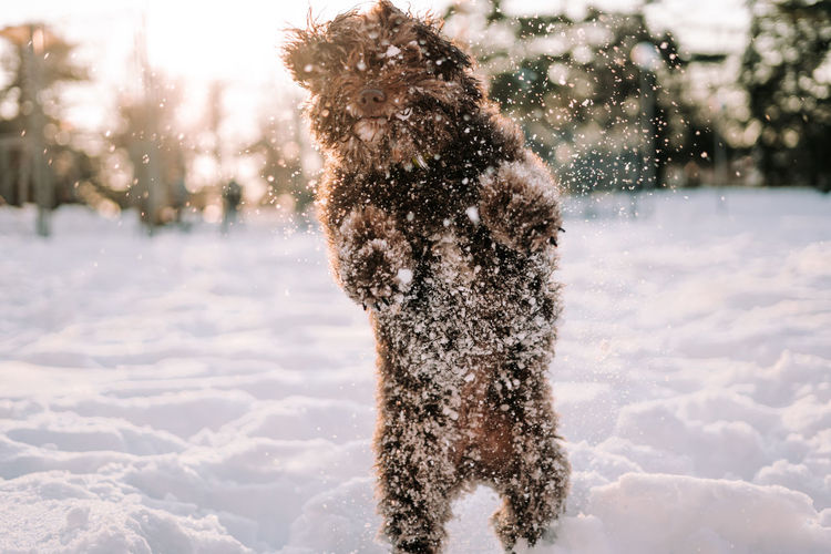 Dog on snow covered land