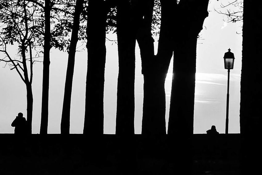 Distanze Blackandwhite EyeEm Best Shots B&w Silhouette Day Tree Shadow Sky Nature Outdoors