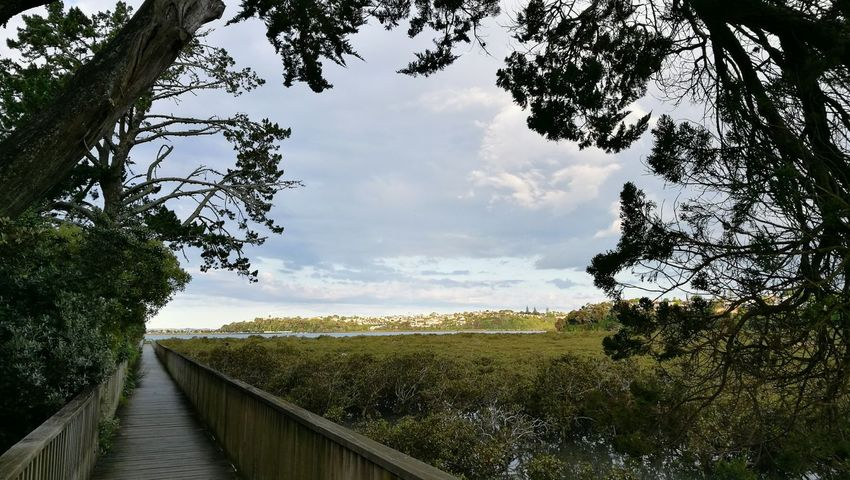 Tree Nature Cloud - Sky Outdoors The Way Forward Landscape Sky No People Day Plant Growth Rural Scene Beauty In Nature Tree Summer Sunsets Sunset_collection Peaceful View Walking Track Auckland