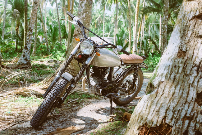 Vintage motorbike parked in the jungle Cafe Racer Classic Day Explore Forest Jungle Motorbike Motorcycle Nature No People Old Outdoors Ride Tree Tree Trunk Vintage